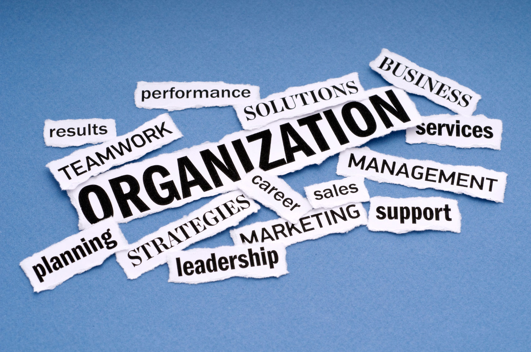 your organisation