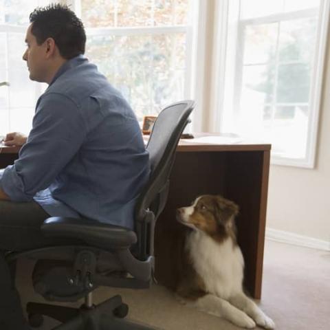 Profesional que trabaja a distancia en su casa frente a la computadora con su perro sentado al lado